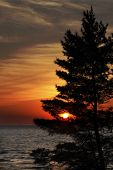 Eastern White Pine On Shore Of Lake Huron At Sunset