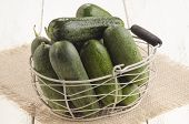 Freshly Picked Gherkin In A Basket