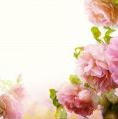 Abstract Beautiful Pink Rose Floral Border Background