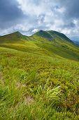 Bieszczady National Park. Carpathian Mountains Grass Landscape
