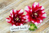 Good luck card with red dahlia flowers on wooden surface
