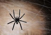 stock photo of cobweb  - Cobweb with spider on wooden background - JPG