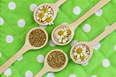 Fresh and dried chamomile flowers on wooden spoons on green cloth