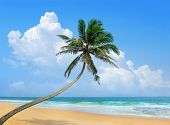 stock photo of bent over  - Palm tree bent over the ocean - JPG