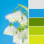 Leucojum Flowers And Color Swatches