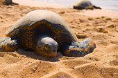 Sea turtle basking in the sun