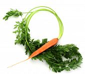 Fresh carrot studio isolated on white background