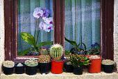 Flower Pots On The Window