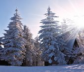 Houses for tourists in the pine forest covered with snow. Christmas sunny morning on a mountain ski resort