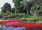 Wonderful bright flowerbeds in an exotic park. Lake Como, Villa Carlotta