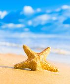 stock photo of starlet  - Fallen Star Sea Starlet  - JPG