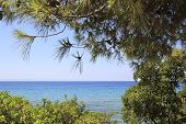 Aegean Sea through the beautiful vegetation.