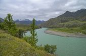 Katun River On An Overcast Day. Altai Mountains.
