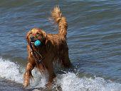 Dog on lakeshore
