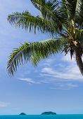 Idyllic Coast Under Trees