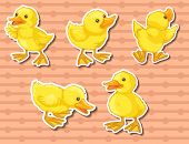 Different actions of five ducklings
