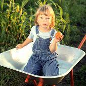 happy boy with a tomato garden in a wheelbarrow