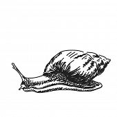 Sketch of snail Vector illustration Hand drawn