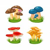 pic of edible mushroom  - Cute little families of mushrooms  in grass on white background vector illustration - JPG