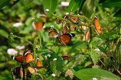 Close up of beautiful butterflies sitting on tree