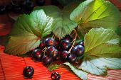 black currant, ripe berries and green leaves on table