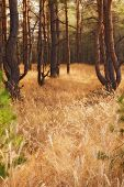 dry grass in autumn forest