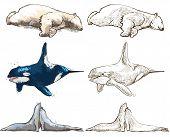 Polar Animals - Coloring Book