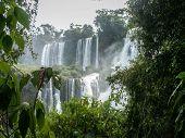 Iguazu Falls Cascade Through Foliage