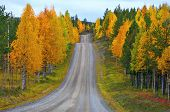 Road In Finland.