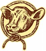 foto of bull head  - Etching engraving handmade style illustration of cow bull head facing front set inside circle rope tied in a knot - JPG