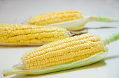 stock photo of sweet-corn  - Peel Sweet corn with white background ready to eat - JPG