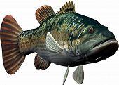 Fische schwimmen in Richtung zu Ihnen