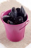 stock photo of bucket  - fresh mussels and pink bucket on brown jute - JPG