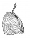 pic of respiratory disease  - Concept or conceptual anatomical human man 3D wireframe mesh respiratory system  with lungs isolated on white background - JPG