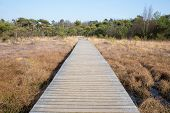 stock photo of marsh grass  - Wooden footpath in grass and forest winter landscape. The path is leading through the middle of the image dividing it in two almost identical, symmetrical halves. On a sunny day with blue sky. Concept of nature, walk, hike, destination, goal, aim. ** Not - JPG