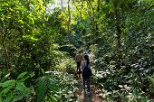 picture of jungle  - Trekkers walking in the dense jungle of the Cat Ba island - JPG