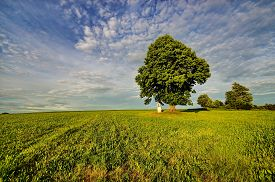 picture of calvary  - Tree loner and calvary summer cloudy early evening - JPG