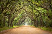 Botany Bay Spooky Dirt Road Creepy Marsh Oak Trees Tunnel