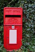 image of english ivy  - Rural post box overgrown with ivy - JPG