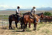 foto of brahma-bull  - hard working cowboys looking off in the mountain side - JPG