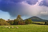 Gathering storm over the Wrekin with sheep in foreground, Shropshire, UK