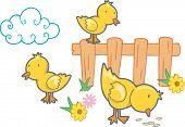 Vector Illustration of Chicks