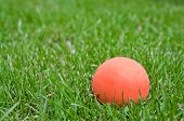 Orange Lacrosse Ball On Grass