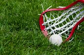 pic of lax  - A lacrosse ball and a girls head on grass - JPG