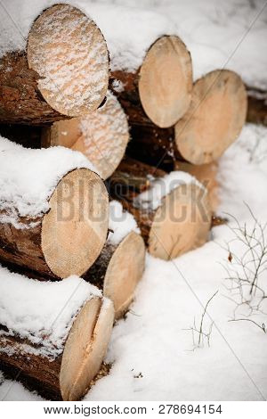 A Pile Of Logs Lies