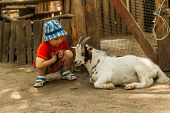 Boy Sits On The Grass And Feeds The Black Goat.boy Sitting Near A White Goat, Friendship Between A C poster
