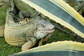 Iguana Park Bolivar Guayaquil Ecuador