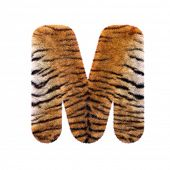 Tiger letter M - Upper-case 3d Feline fur font isolated on white background. This alphabet is perfec poster