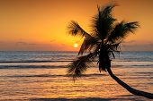 Coco Palm At Sunset Over Tropical Beach In Caribbean Sea. Summer Vacation And Travel Concept. poster