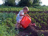 Boy Is Watering Sweet Pepper